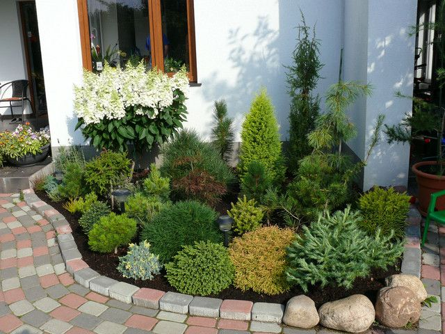 Dwarf conifer landscaping landscape pinterest dwarf for Ideal trees for small gardens