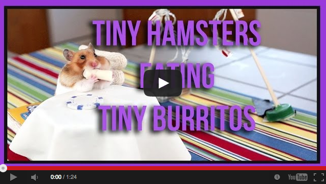 Because It's Friday:  Watch This Tiny Hamster Eat a Tiny Burrito