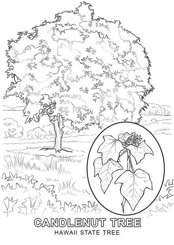 Hawaii State Tree coloring page from Hawaii category