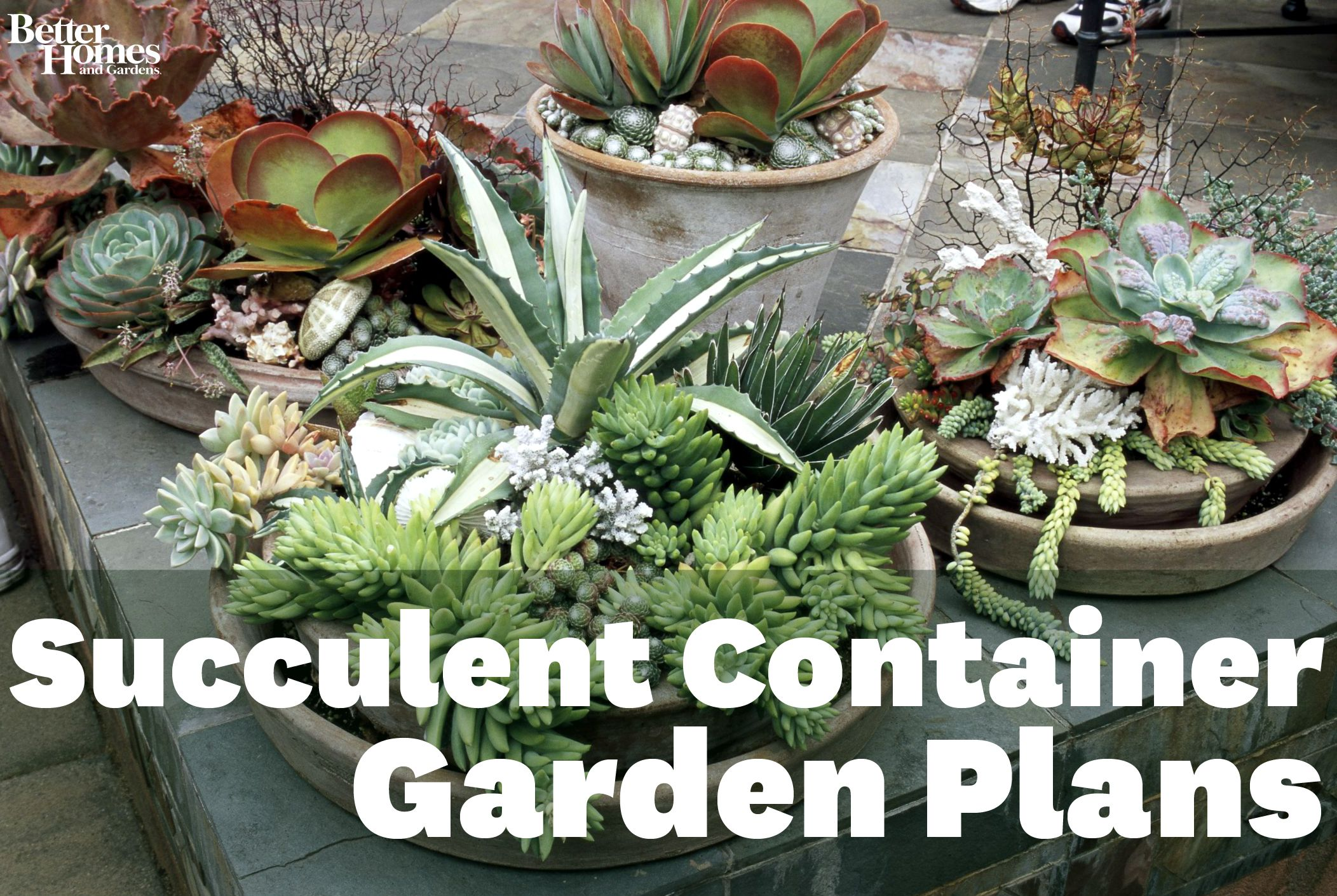 Drought Tolerant Succulent Container Garden Plans Succulents