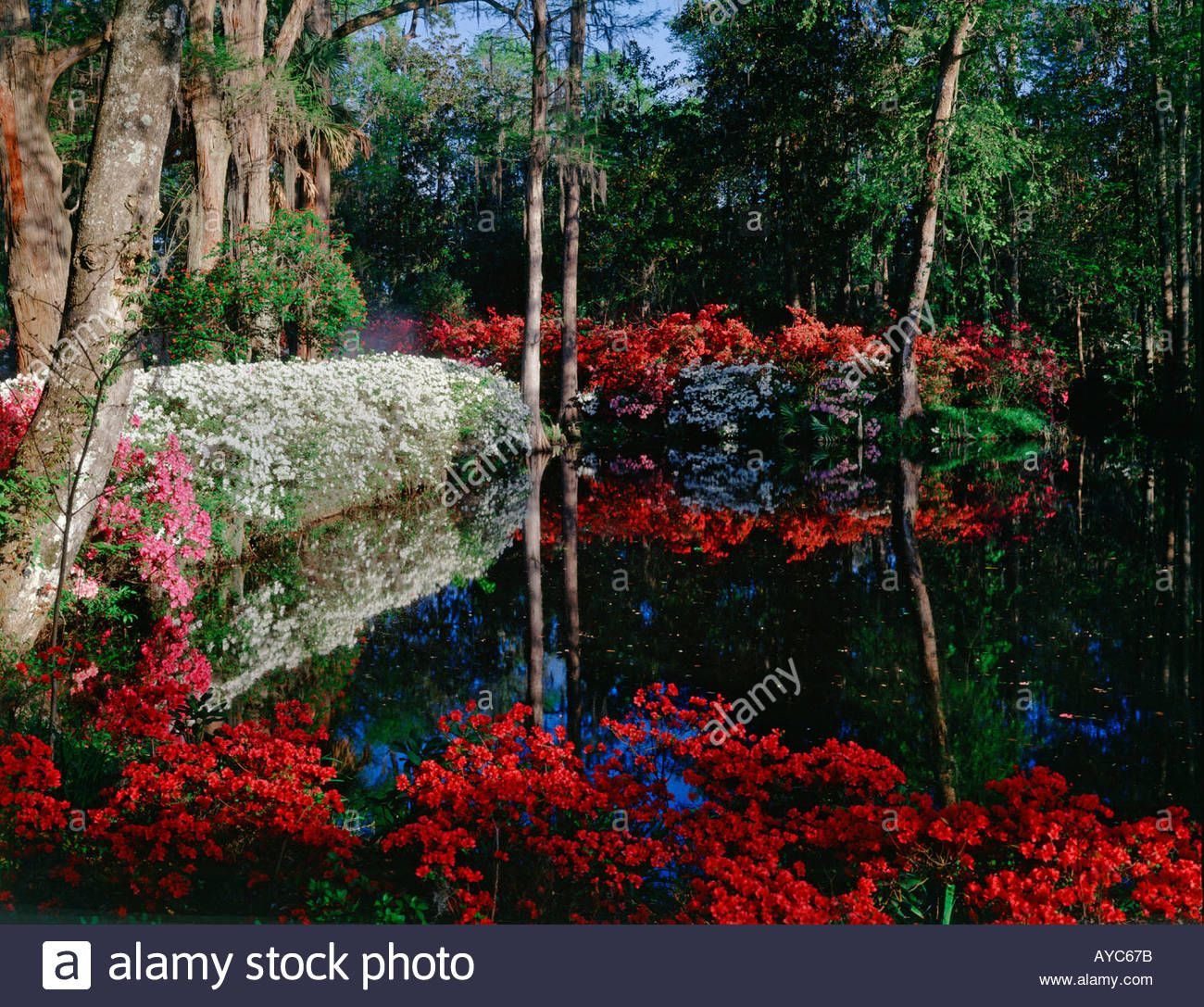 Magnolia Gardens near Charleston in South Carolina with