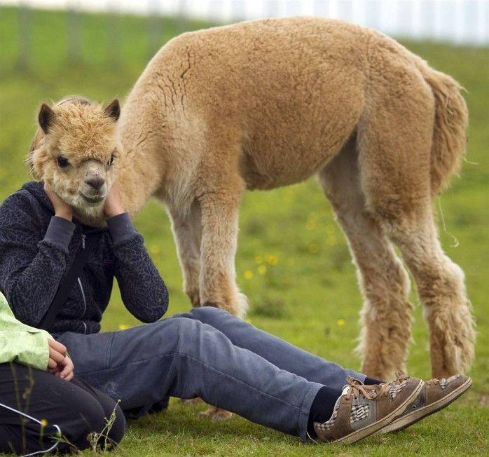 مجموعه اخرى من صور حيوانات جميله و مضحكه عاليه الوضوح Funny Optical Illusions Funny Llama Funny Animals