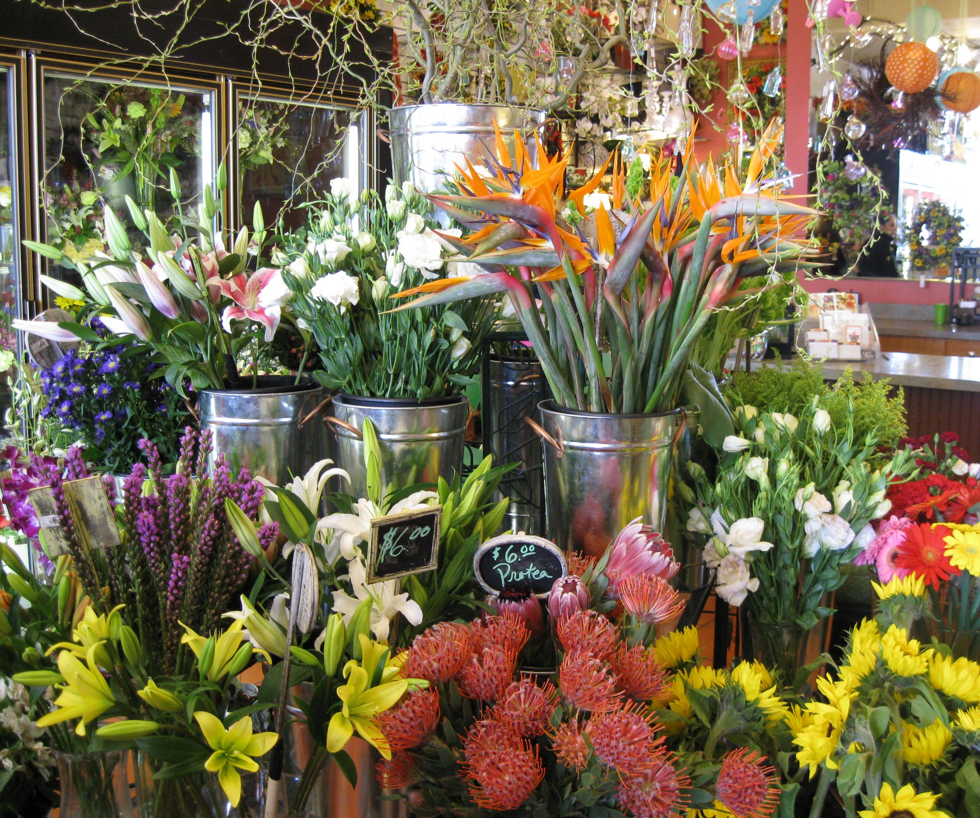 Janda Florist Baltimore Flowers Baltimore Maryland Order Flowers Plant Gifts Flowers Delivered
