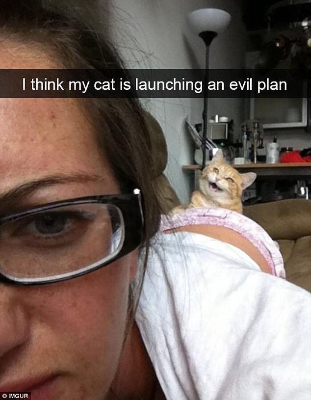 New Funny Cats 15+ Hilarious Meme's That Show The Tricky Side Of Cats | Meowing Cats 15+ Hilarious Meme's That Show The Tricky Side Of Cats - Meowing Cats 4