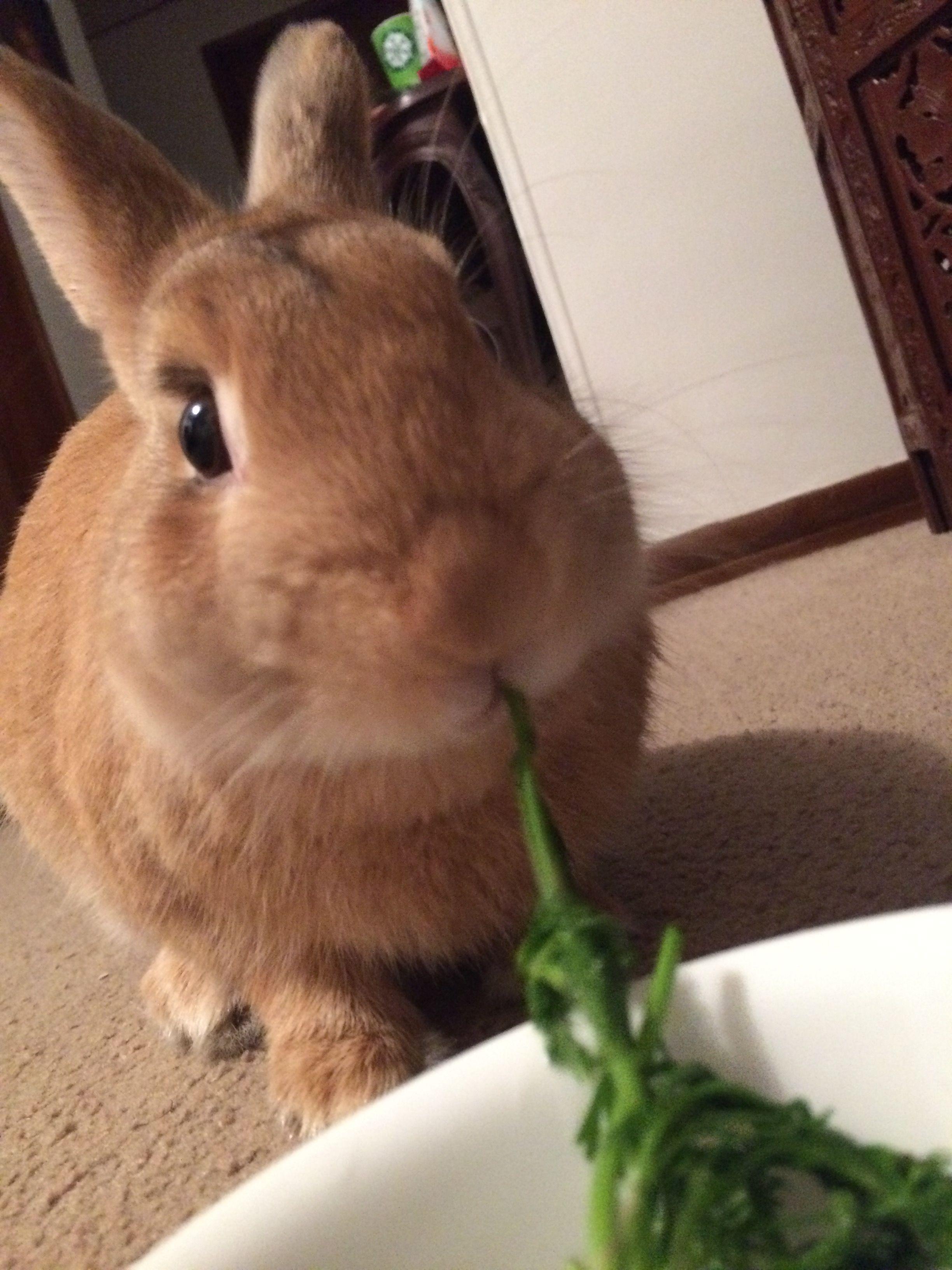 Pin By Edie Wallace On Bunnies Cute Bunny Sweet Animals Dutch Rabbit