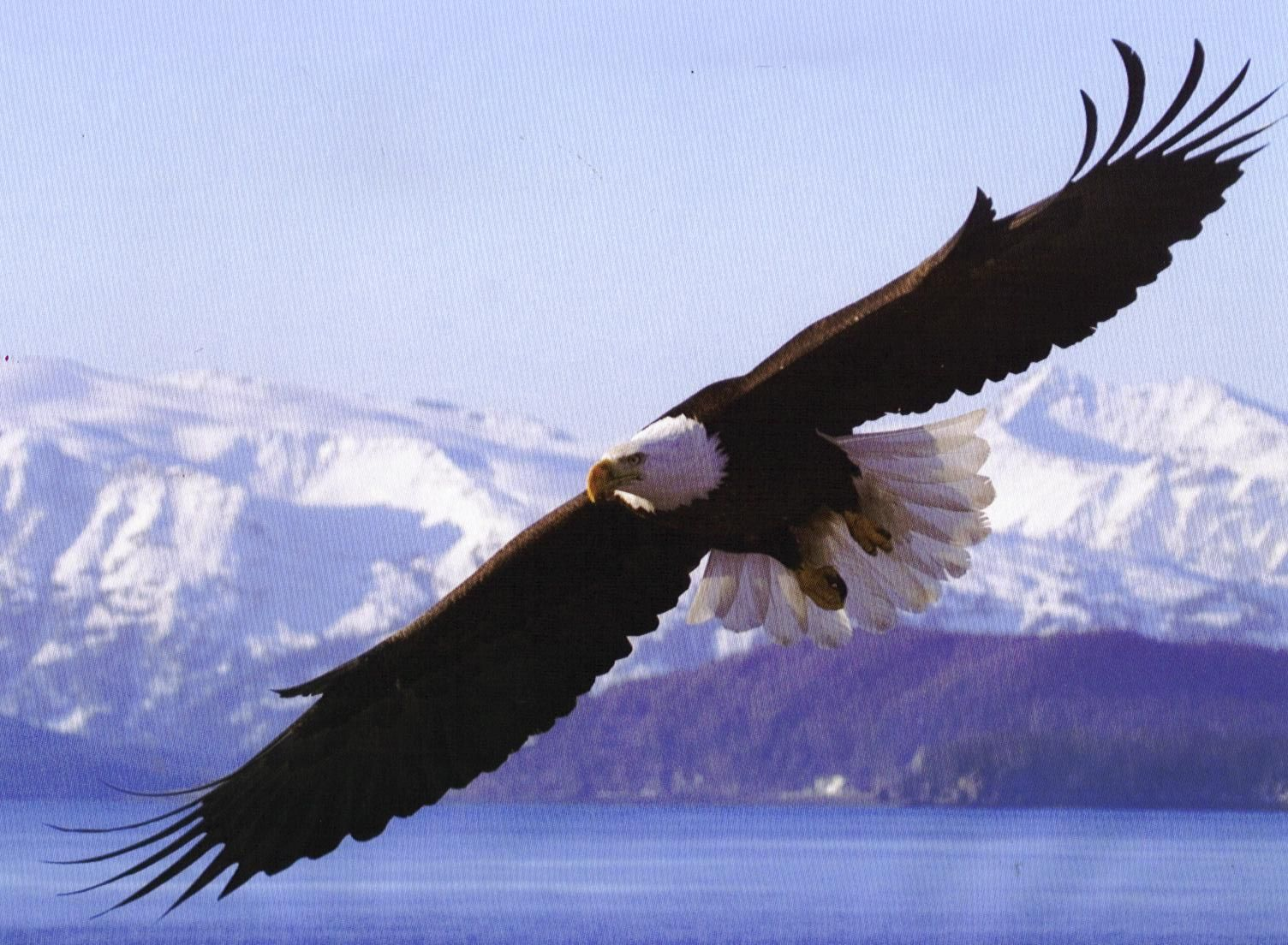 The Mighty Bald Eagle Usa National Symbol Fast Secrets Usa