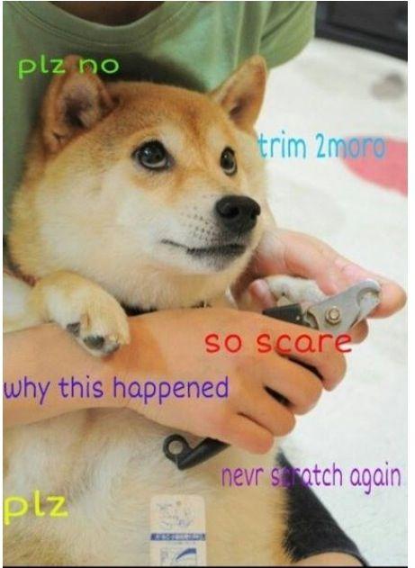 Doge So Cute Cute Doge Misc Doge Meme Doge Funny Animal Memes