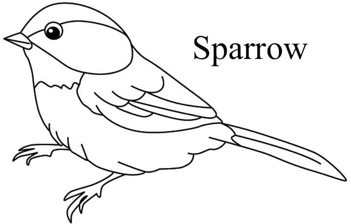His Eye Is On The Sparrow Bird Coloring Pages Tree Coloring