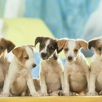 Free Dogs Wallpaper And Free Dogs Screensaver Dog Wallpaper