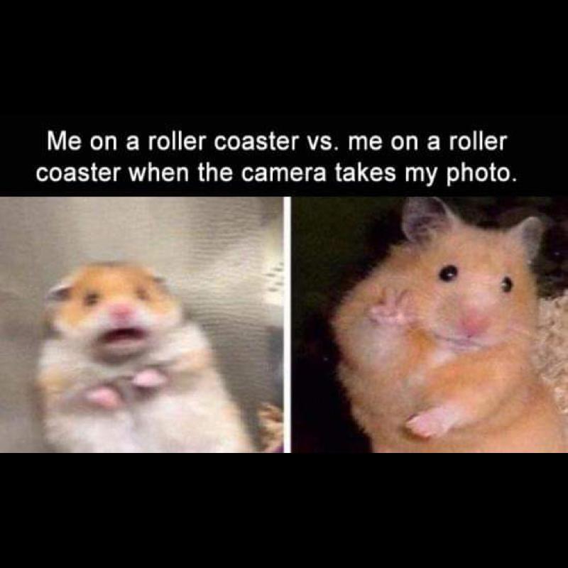 Saubere Meme 23 11 2009 Nachmittag Funny Animal Memes Animal Funny Meme Memes Nachmittag Sau Memes Funny Faces Funny Memes Sarcastic Funny Tweets