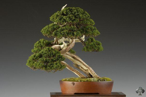 Bonsai Gallery Bonsai Empire Bonsai Tree Bonsai Styles Bonsai