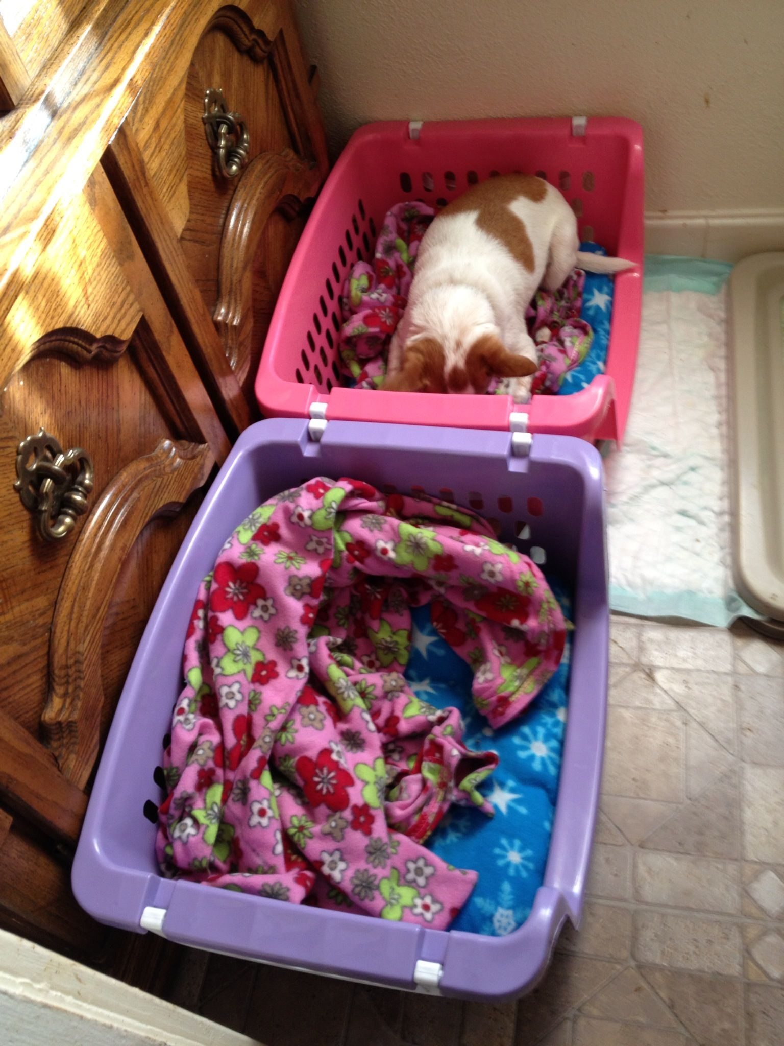 Dog beds... Made from Walmart laundry baskets and yard