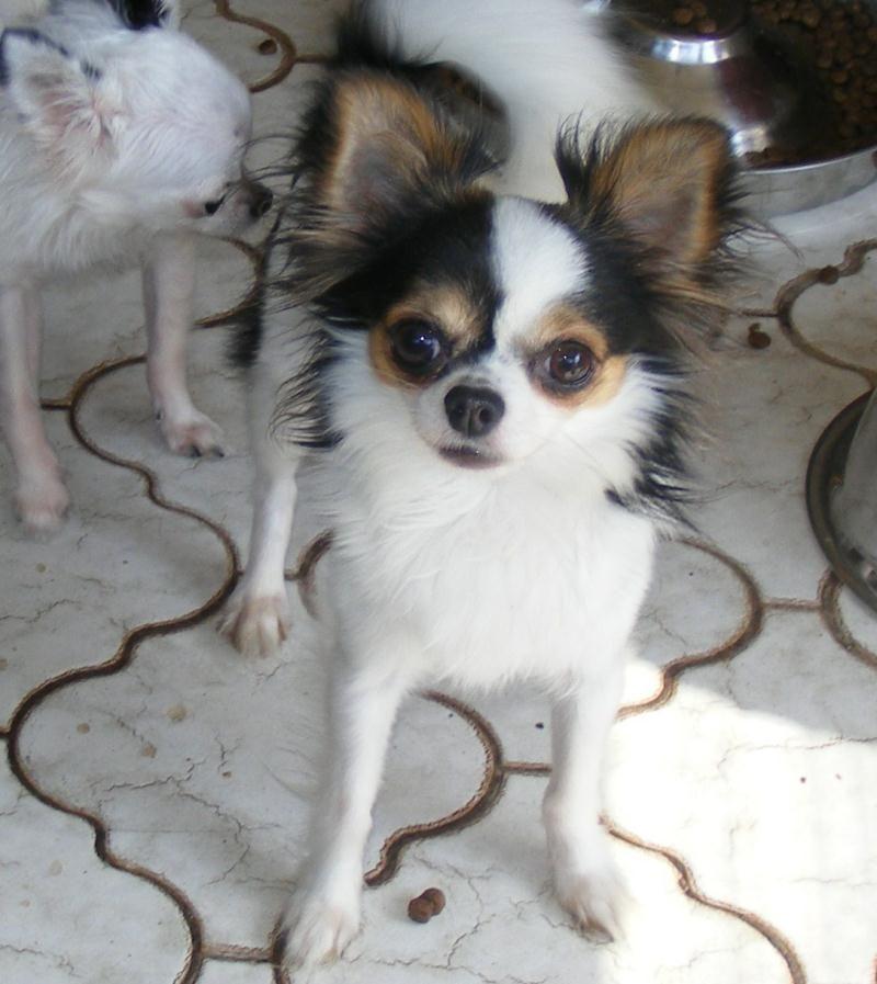Xoloitzcuintli Puppies For Sale Australia Ideas