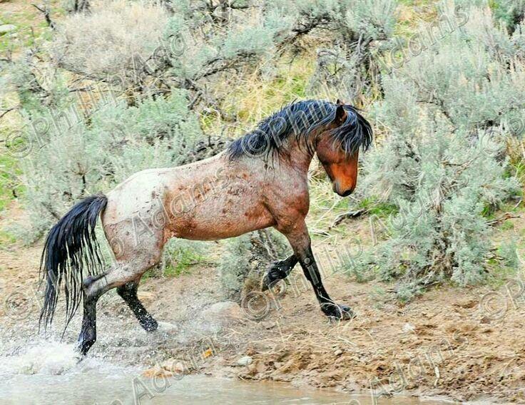 diefor clydesdale pferde sch ne pferde pferdefotos