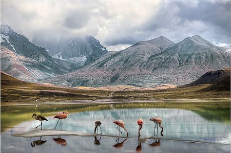 Feeding flamingos Photo by Sabry Mason -- National Geographic Your Shot