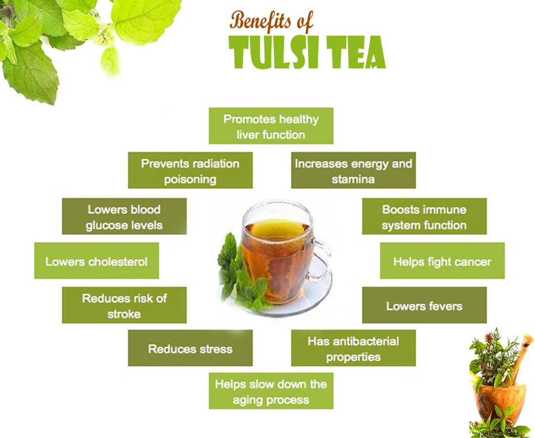 "Tulsi, also known as ""Holy Basil"" is common in Indian households. It consumes many health benefits, while taken as tea or raw."