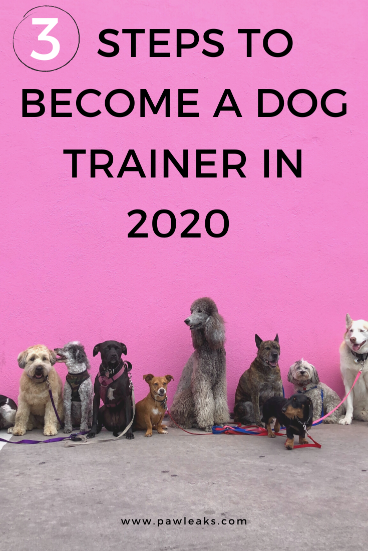 3 Steps To Become A Dog Trainer In 2020 Pawleaks In 2020 Become A Dog Trainer Best Apartment Dogs Dog Trainer