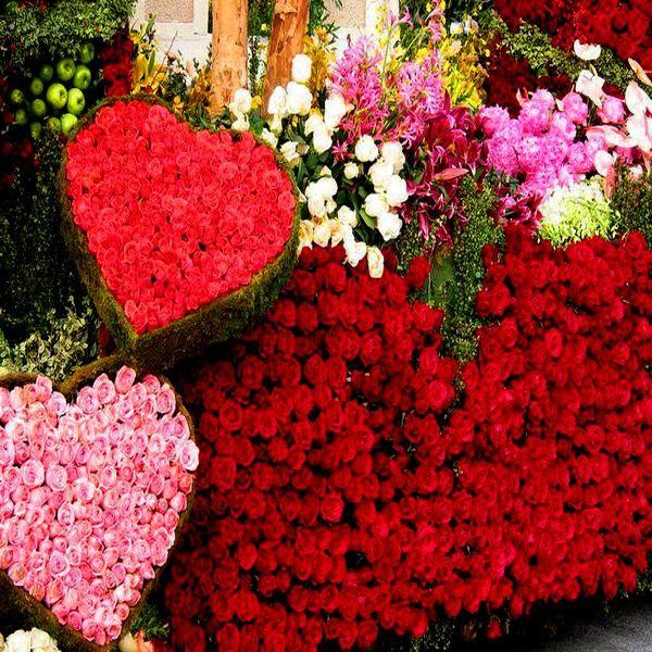 imagenes-de-rosas-rojas-hermosas-3.jpg (600×600)
