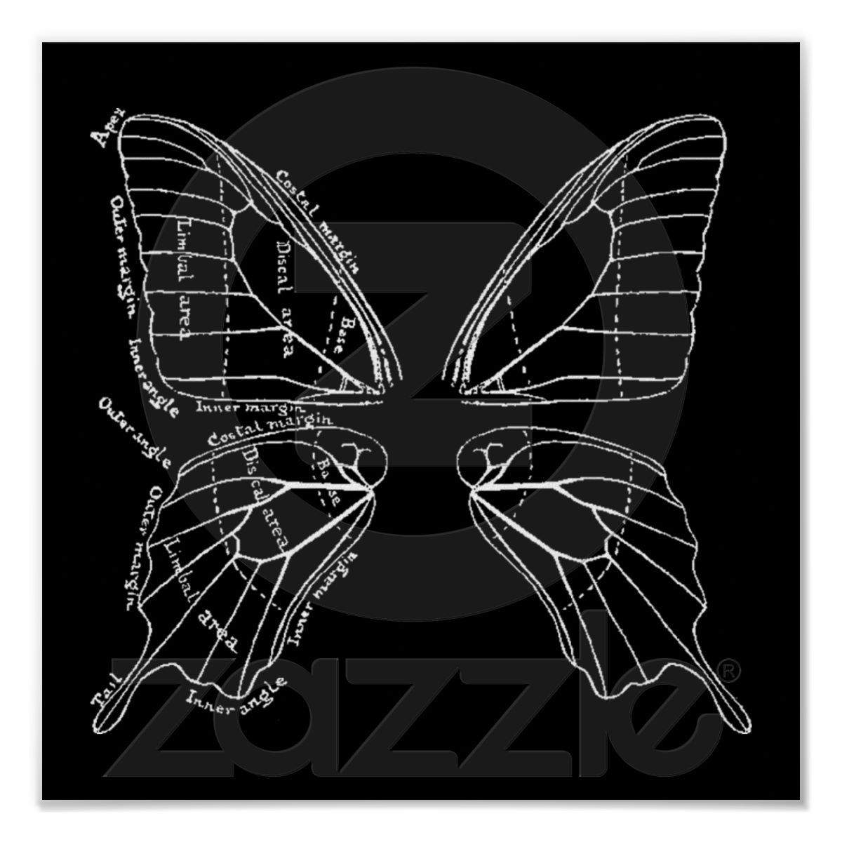 Anatomy Of A Butterfly Wing Vintage Diagram Poster | Pinterest