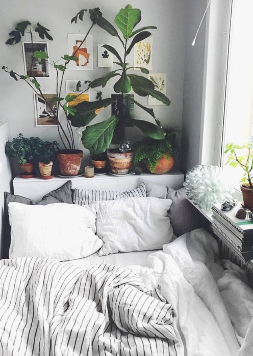 Urban Outfitters Bedroom Indoor Plant Succulent Ideas For The