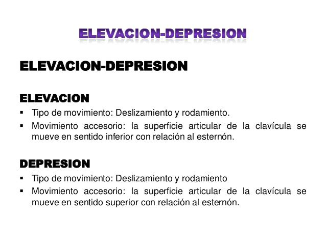 Resultado de imagen de elevacion y depresion anatomia | Localización ...