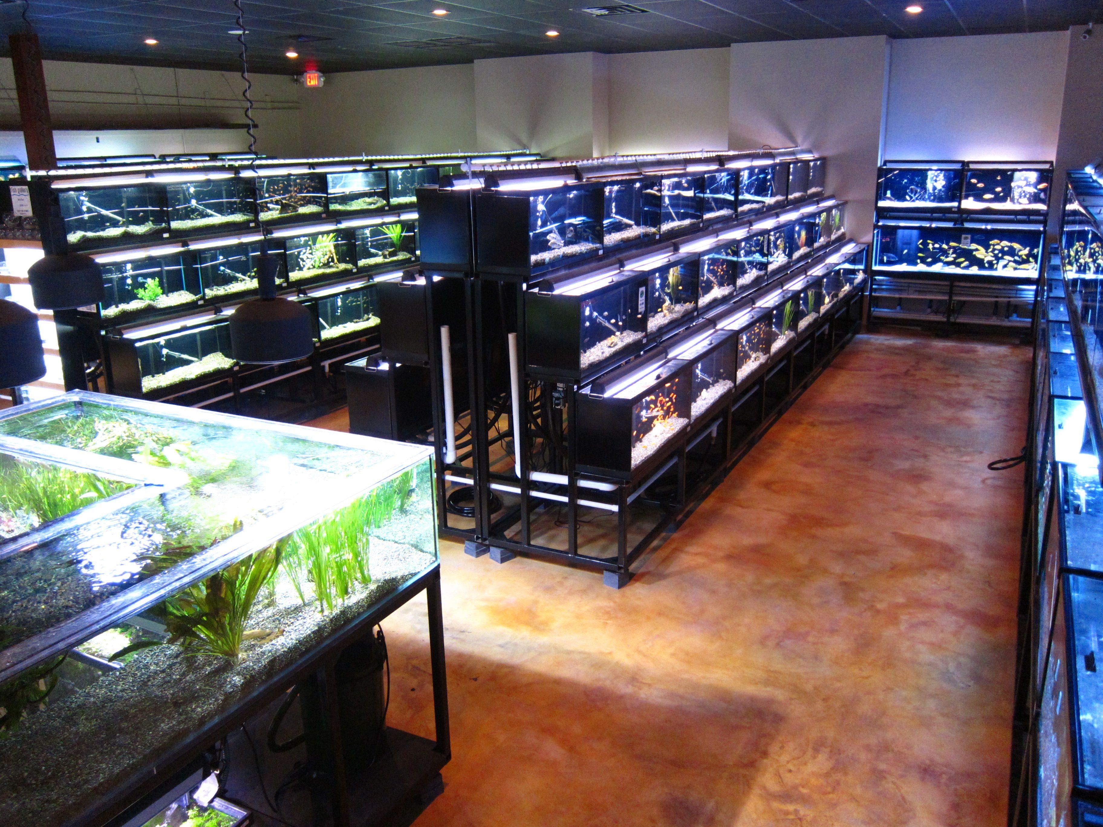 Freshwater Fish Department Aquarium Fish Store Aquarium Shop Aquarium Store