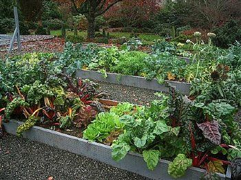 Fall and Winter Guide to Seattle Gardening Renter Resources