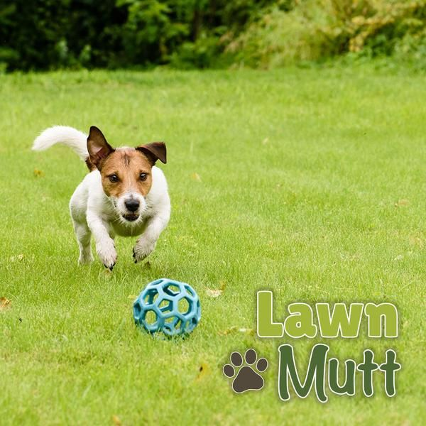 Awnmutt Knows Pet Owners Love Their Lawns Let S Keep Your Lawn Healthy Grland