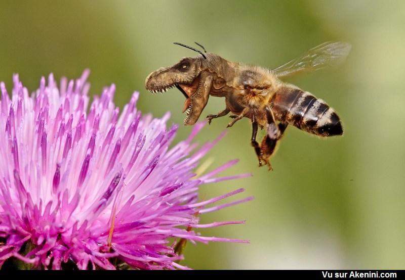 Akenini Com Montage Photo Animaux Hybrid Animals Photoshop Bee Friendly Garden Bee Keeping Bee