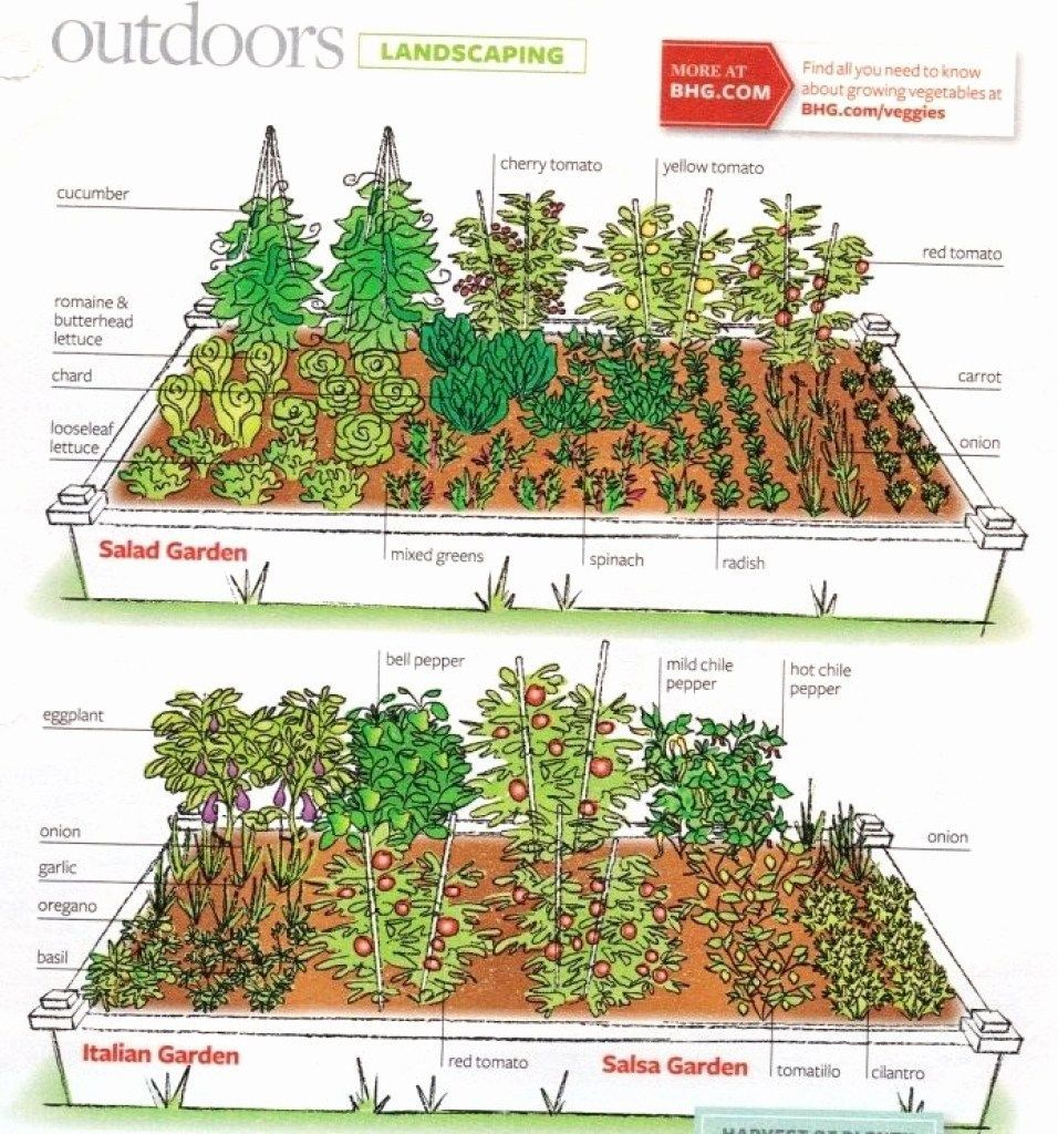 4x8 raised bed vegetable garden layout Google Search