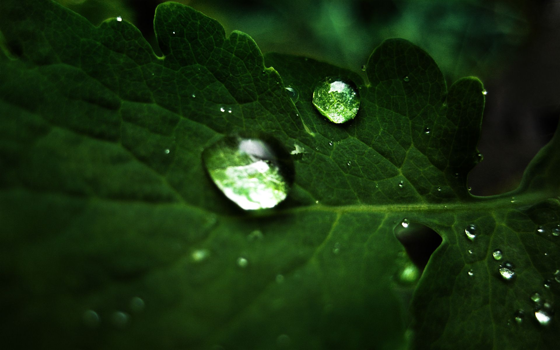 amazing nature | beautiful capture of water drops on green leave