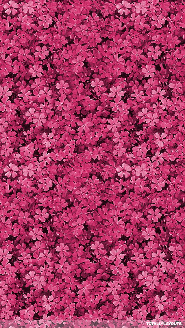 Discover Ideas About Flower Iphone Wallpaper Pretty Field Of Pink