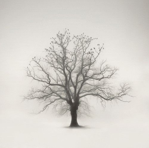 autumn, birds tree photo, forest, time, tree