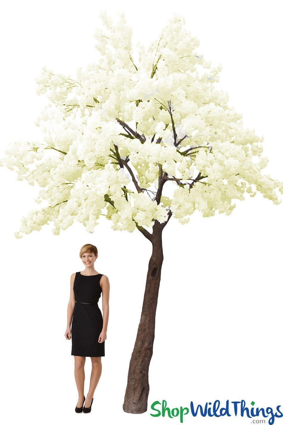 Flowering Dogwood Tree 14' Tall x 13' Wide Cream