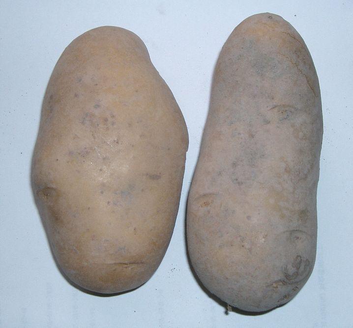 Patata (alimento) - Wikipedia