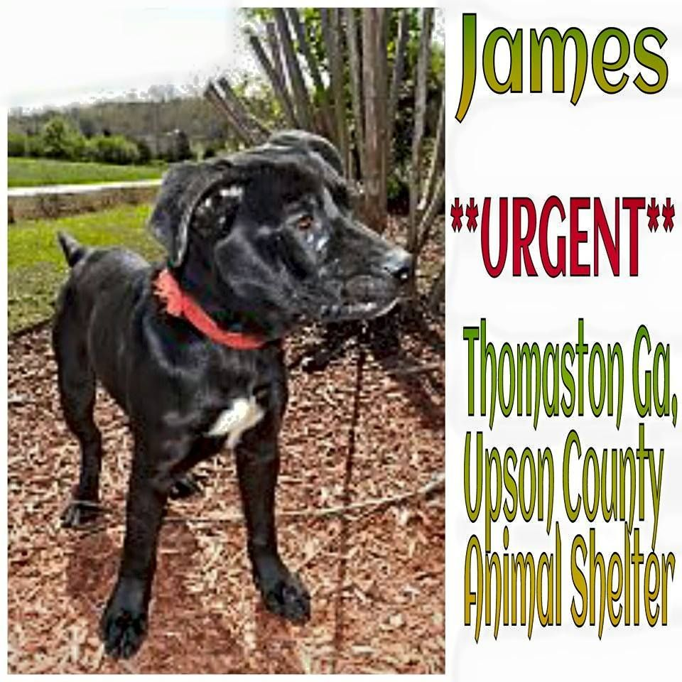 Thomaston Ga Meet James This Young Little Boy Is In Need Of A