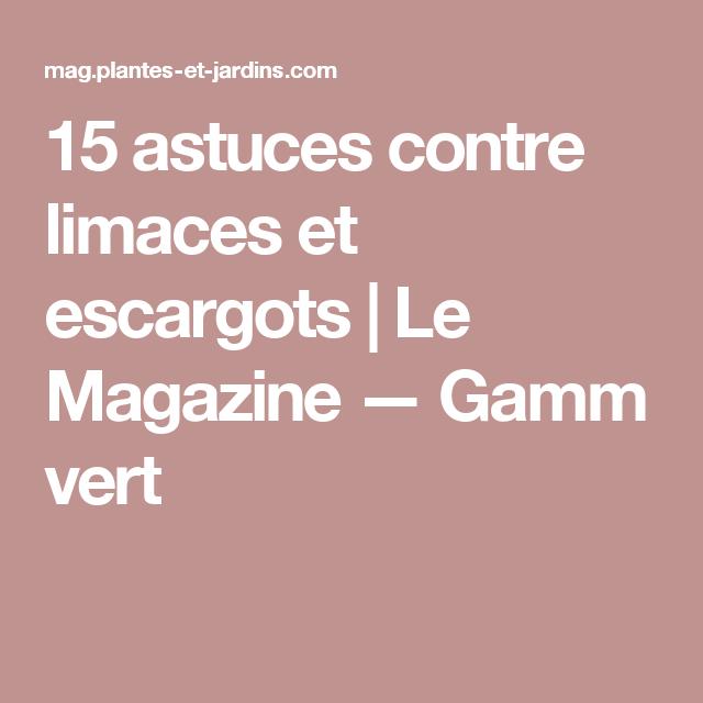 15 astuces contre limaces et escargots | le magazine — gamm vert
