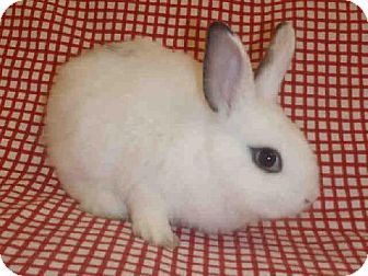 Pin To Help Urgent In California This Sweet Little Dwarf Hotot Bunny Rabbit Really Needs A Loving Home Id A1426273 At North Ce With Images Animals Humane Society Pets