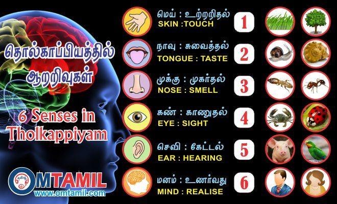 6 senses