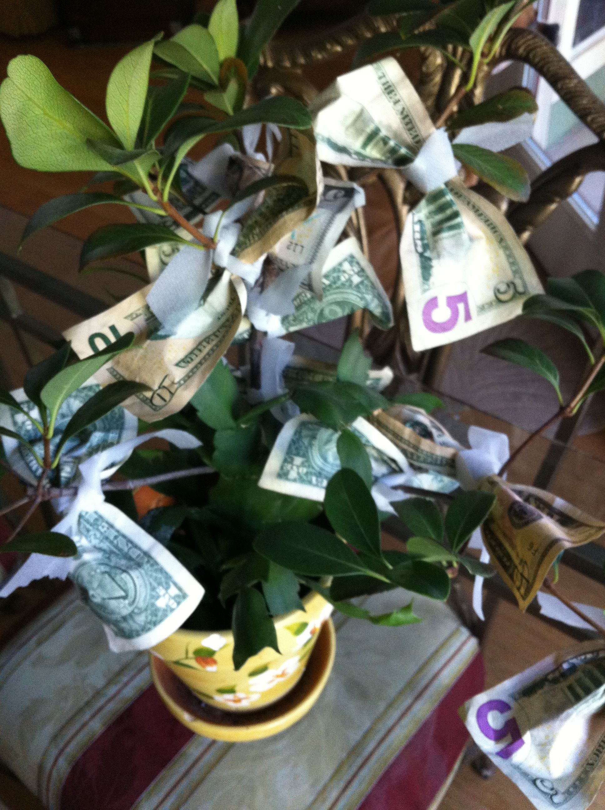 Great gift money tree for the home pinterest money trees great gift money tree negle Image collections