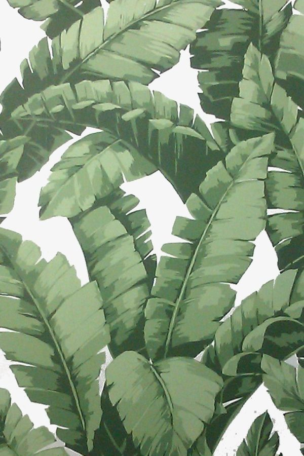 Palm Leaf Leaves PNG Image