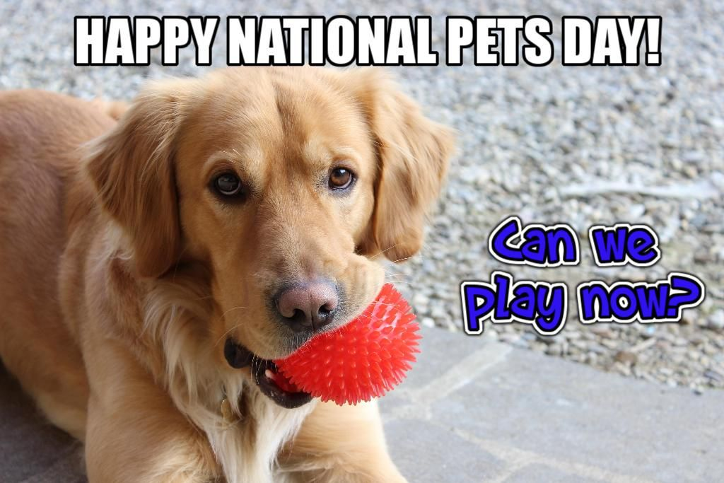 It's National Pet Day! Come play with me...