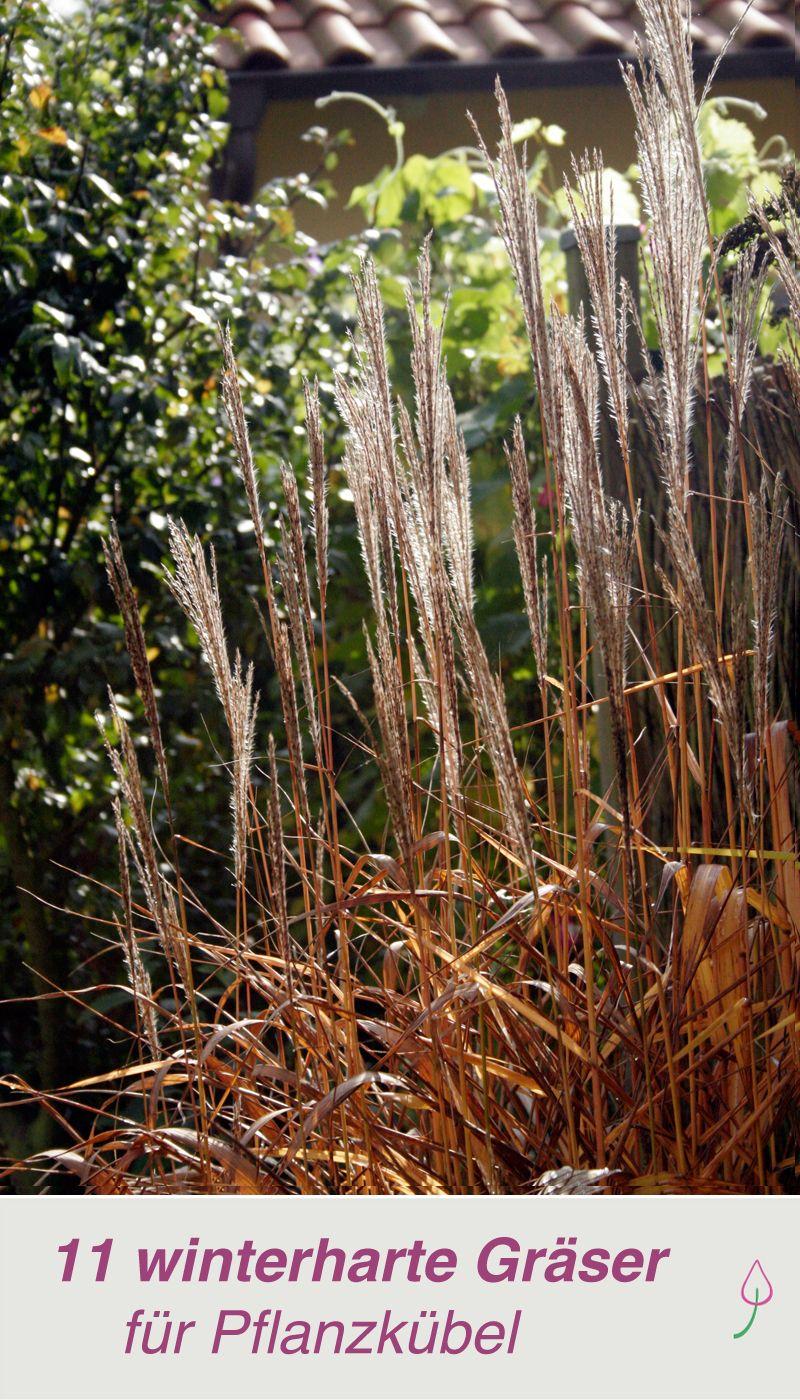 Die Schönsten Gräser Für Den Garten die 11 schönsten gräser für pflanzkübel sichtschutz für balkon