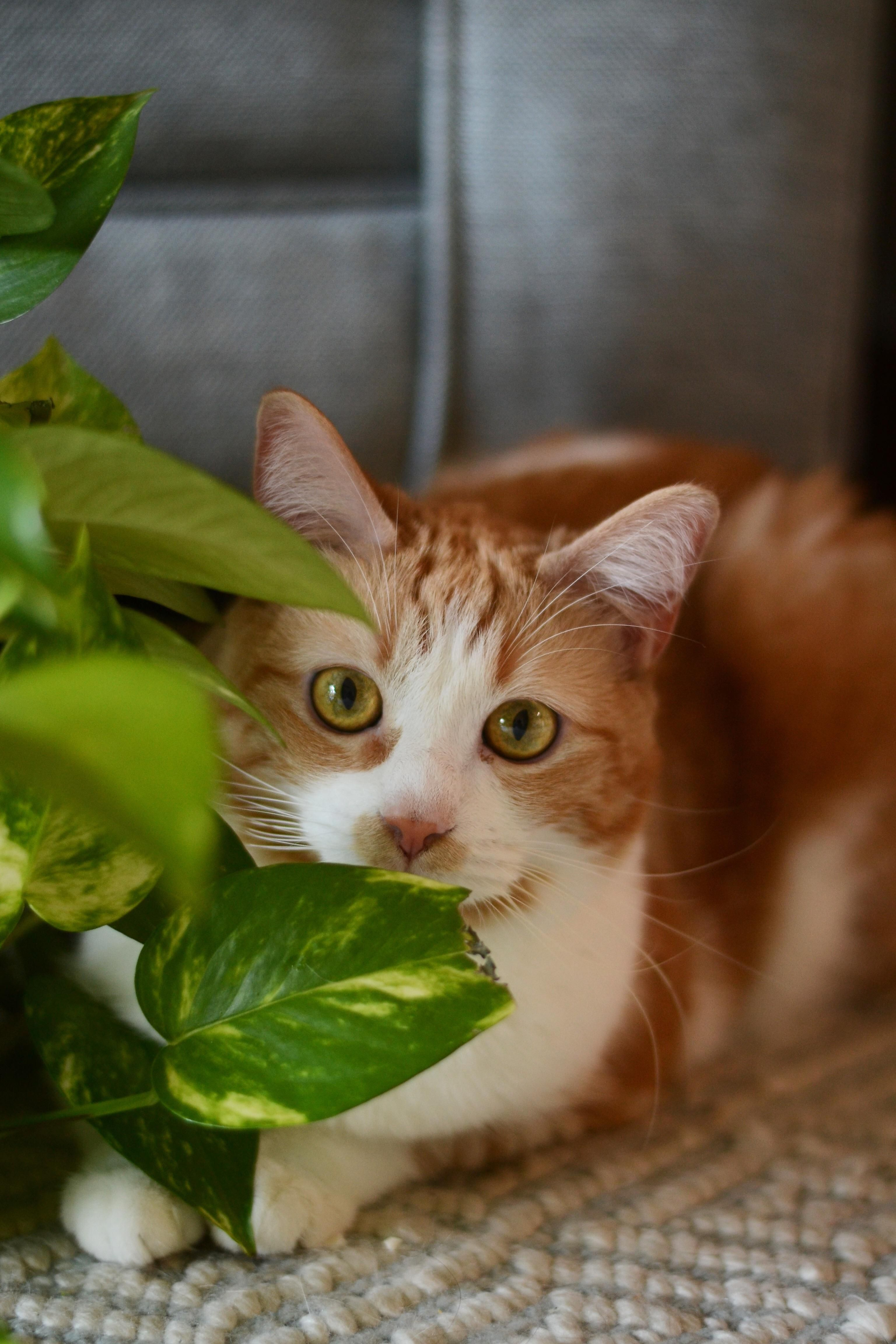 Did A Little Photoshoot With My Cat Potatohttps I Redd It Hg5dnbbn59b21 Jpg Cats Photoshoot Cute Pictures