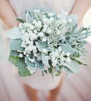 Lambs Ear Baby S Breath I Was Thinking Some Of This Frosted Greenrey For Behind The Groomsmen S White Ro Wedding Bouquets White Wedding Bouquets Jade Wedding