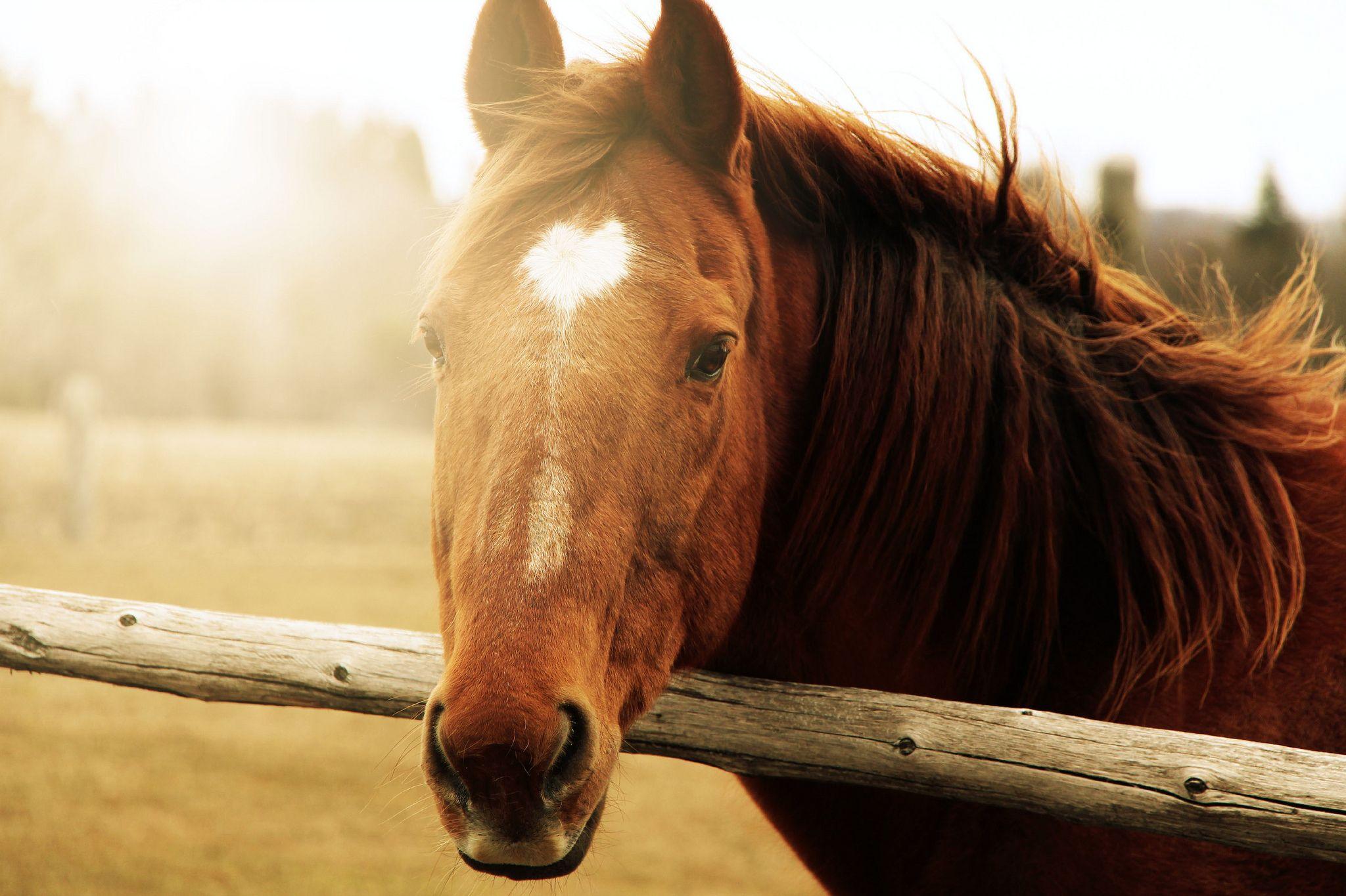 Horse Face Gallery Horses Horse Heart Animals [ 1365 x 2048 Pixel ]