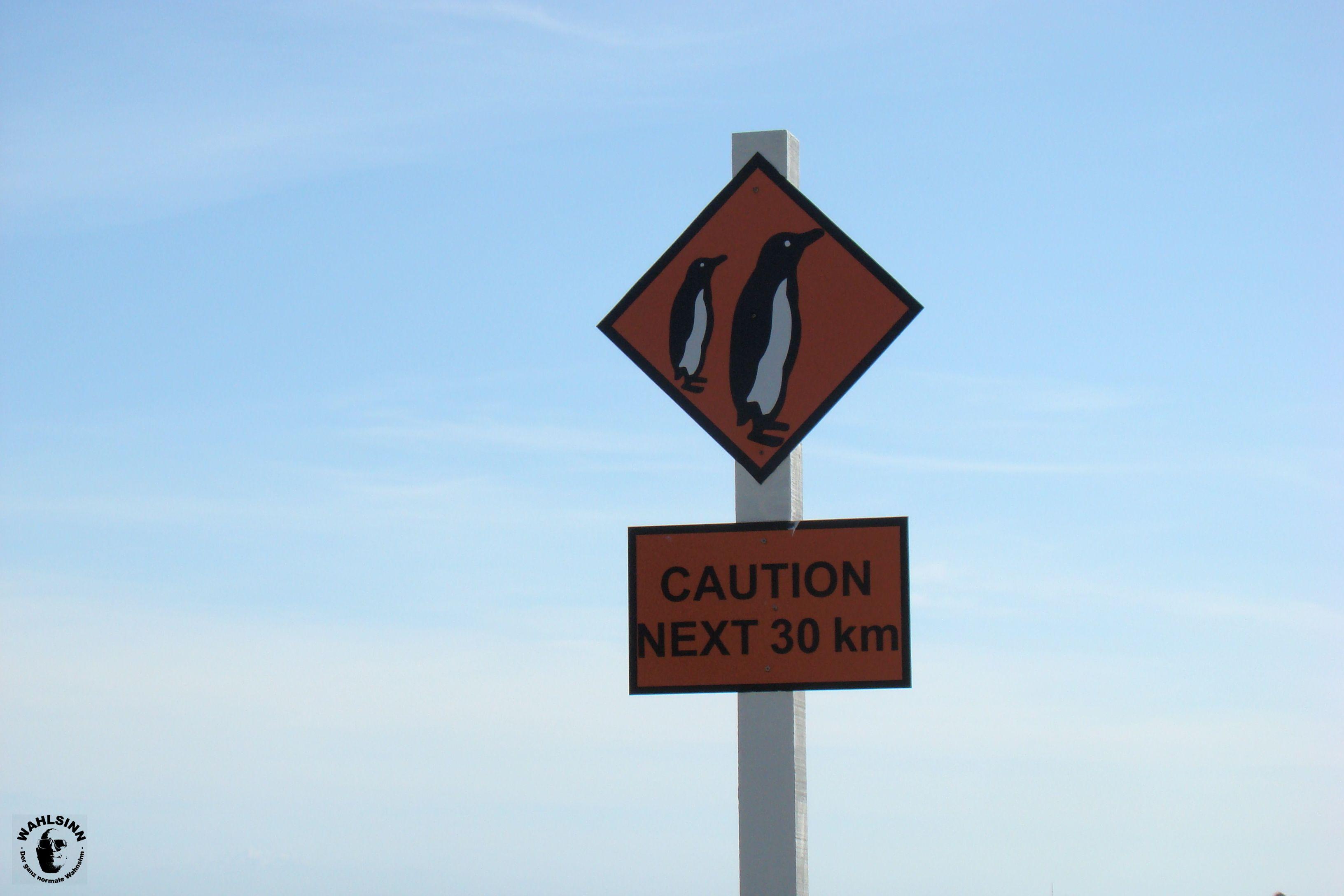 Achtung - in den nächsten 30 km schauen 2 Pinguine in den Himmel