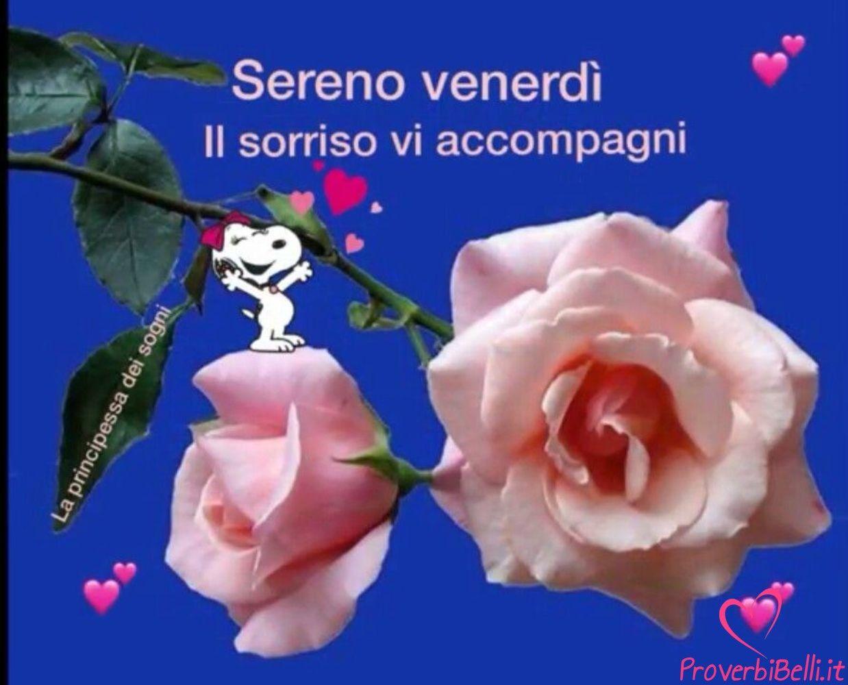 buongiorno venerdì immagini per whatsapp proverbibelli it