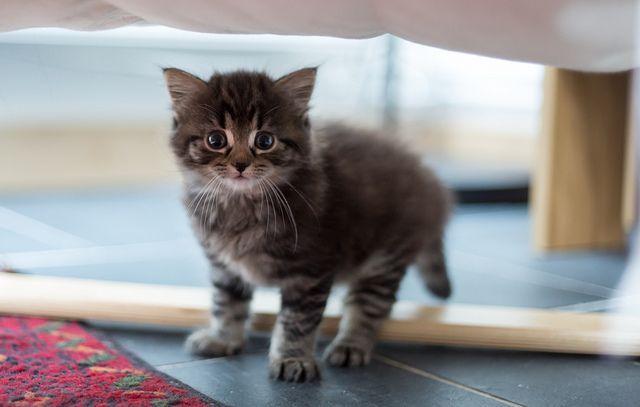 my dream cat!!!!!!!!!!!!!!!!!!!! super cute!