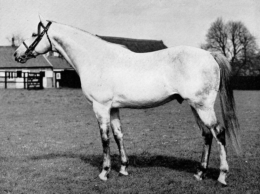 Grey Sovereign 1959 Horse racing bet, Thoroughbred